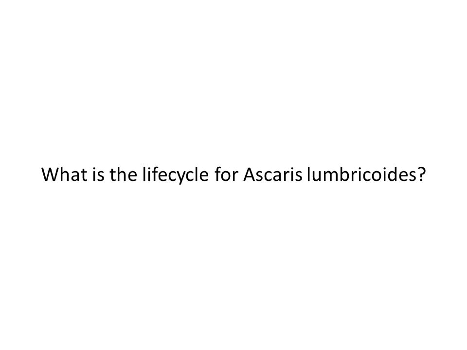 What is the lifecycle for Ascaris lumbricoides