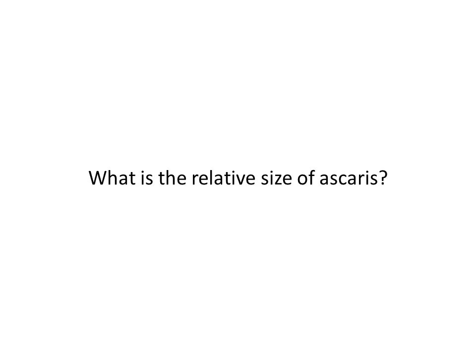 What is the relative size of ascaris