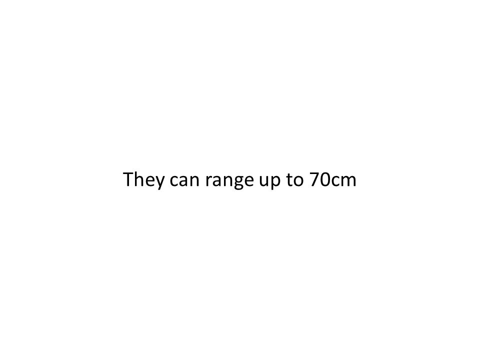 They can range up to 70cm