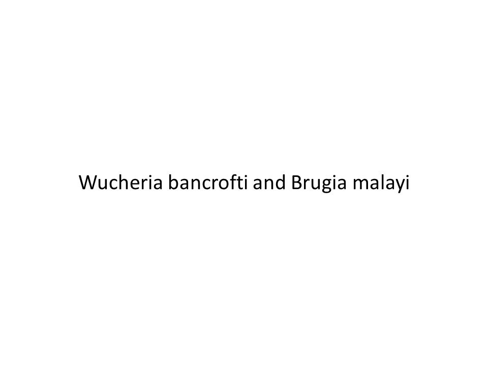Wucheria bancrofti and Brugia malayi