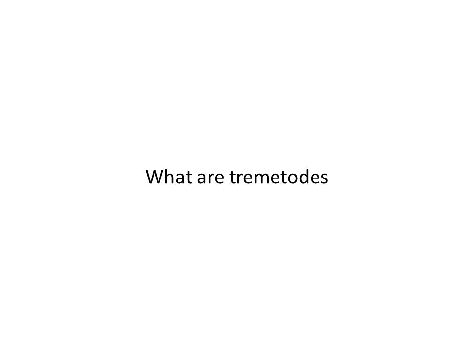 What are tremetodes
