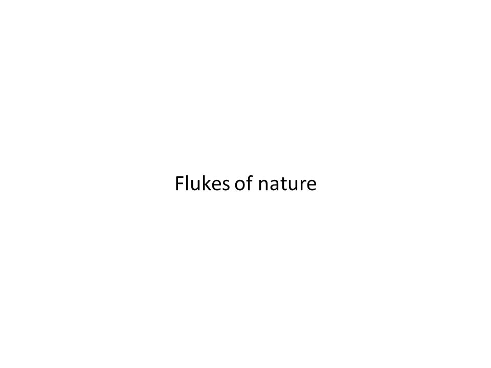 Flukes of nature
