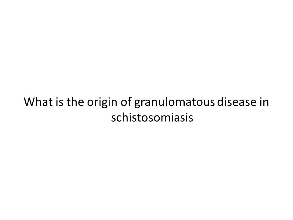 What is the origin of granulomatous disease in schistosomiasis