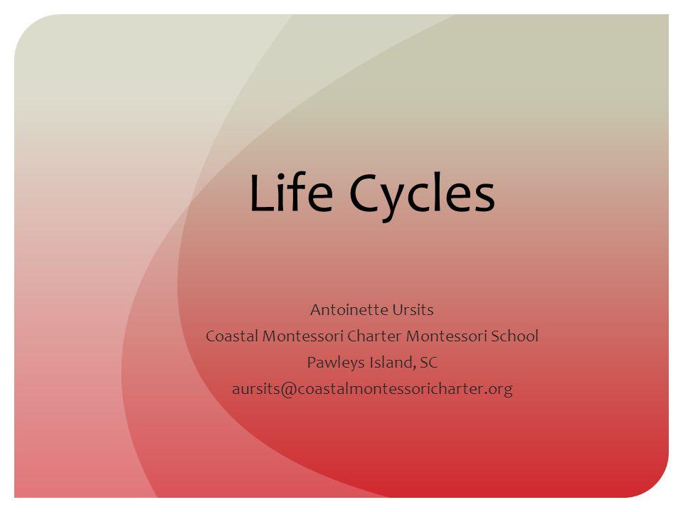 Life Cycles Antoinette Ursits Coastal Montessori Charter Montessori School Pawleys Island, SC aursits@coastalmontessoricharter.org