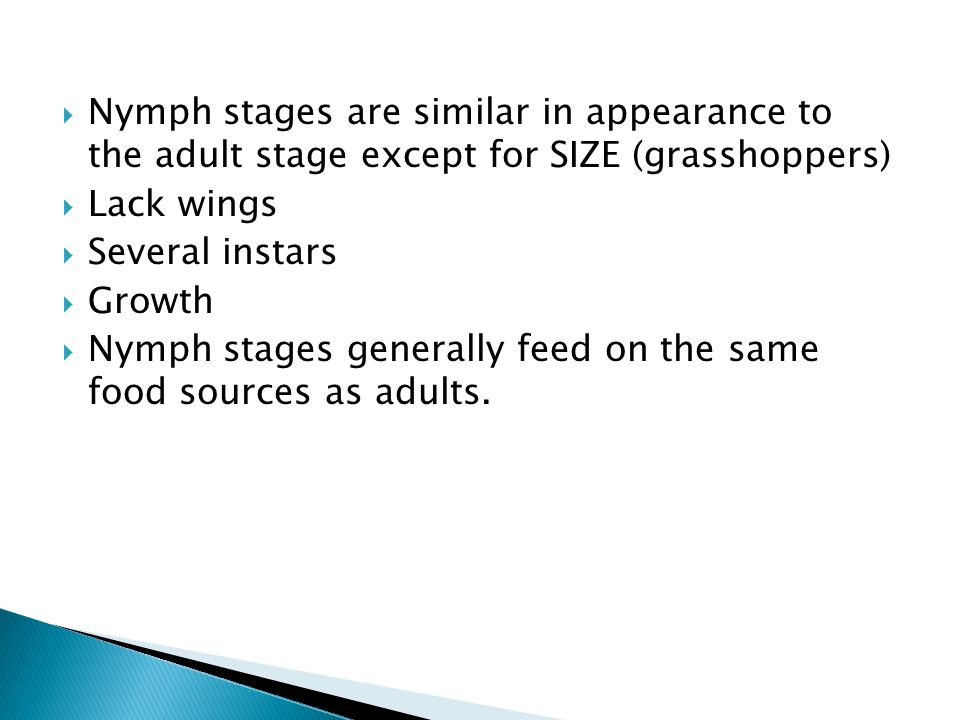  Nymph stages are similar in appearance to the adult stage except for SIZE (grasshoppers)  Lack wings  Several instars  Growth  Nymph stages generally feed on the same food sources as adults.