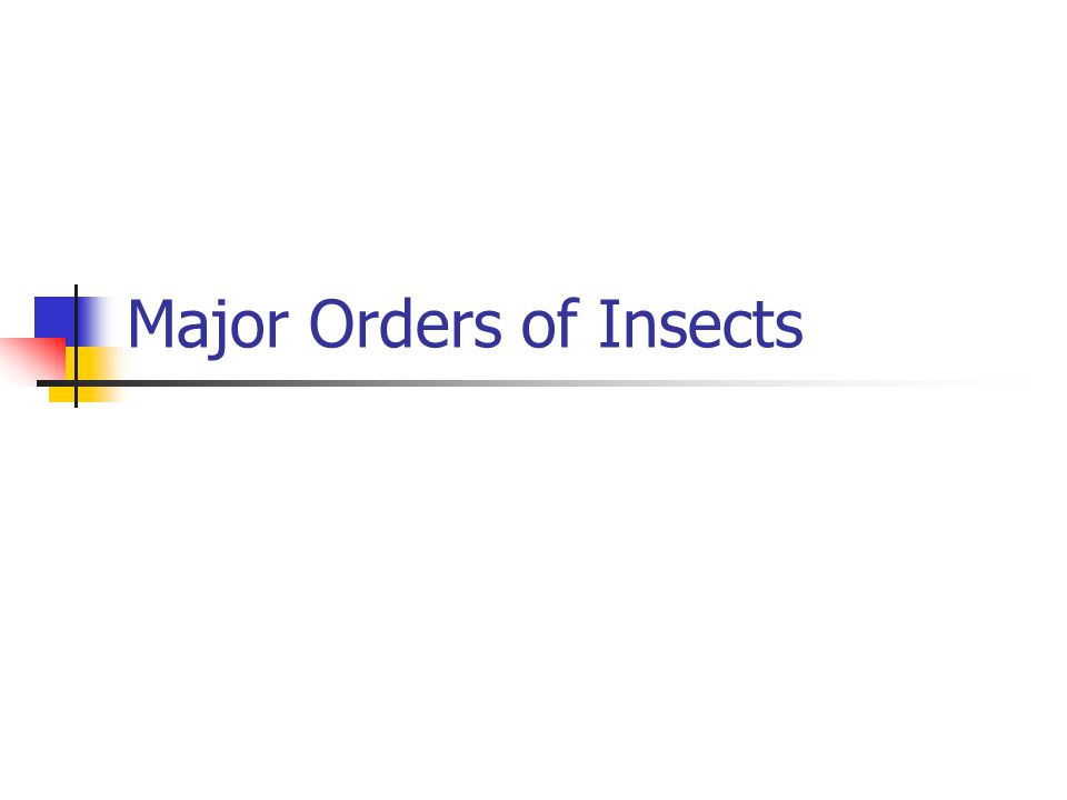 Major Orders of Insects