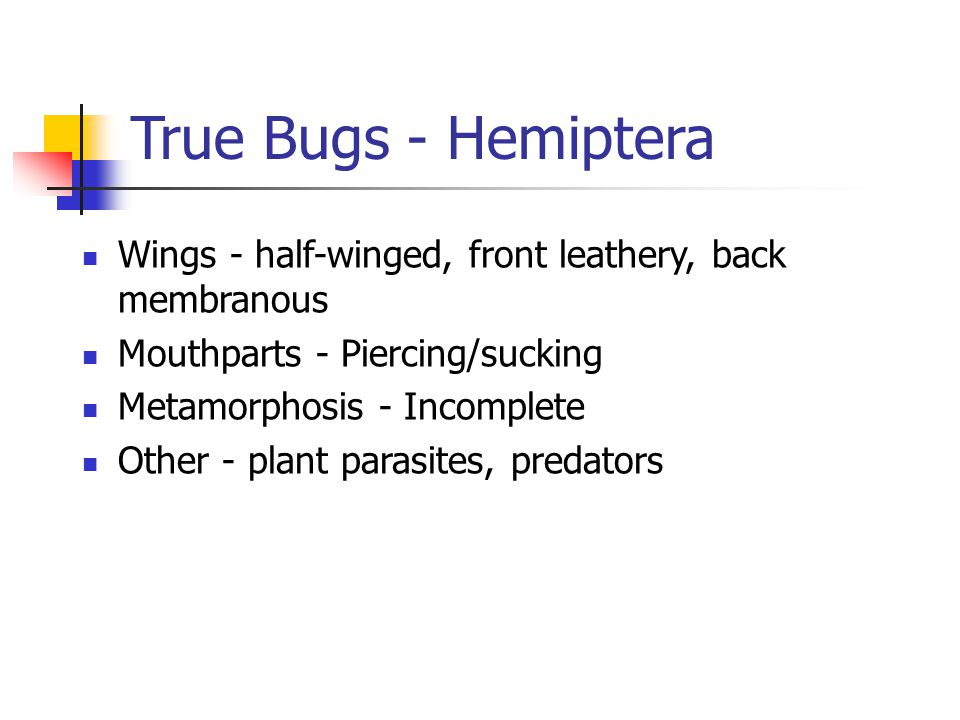 True Bugs - Hemiptera Wings - half-winged, front leathery, back membranous Mouthparts - Piercing/sucking Metamorphosis - Incomplete Other - plant parasites, predators