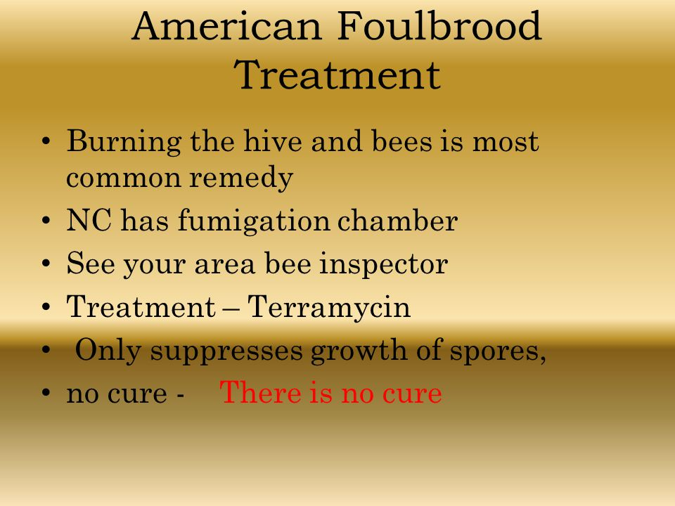 American Foulbrood Treatment Burning the hive and bees is most common remedy NC has fumigation chamber See your area bee inspector Treatment – Terramy