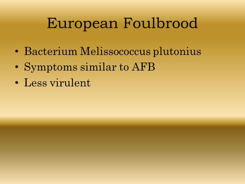 European Foulbrood Bacterium Melissococcus plutonius Symptoms similar to AFB Less virulent