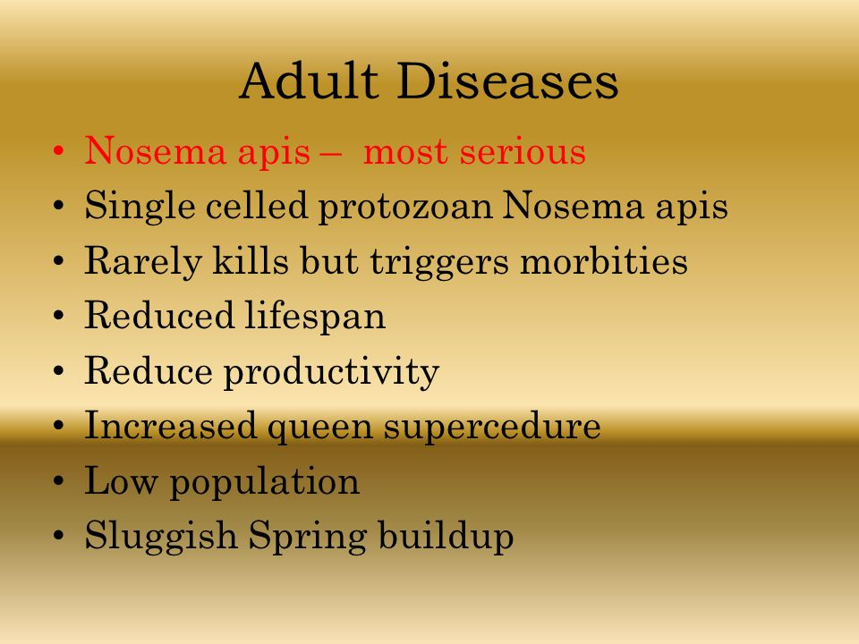 Adult Diseases Nosema apis – most serious Single celled protozoan Nosema apis Rarely kills but triggers morbities Reduced lifespan Reduce productivity