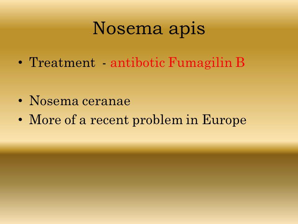 Nosema apis Treatment - antibotic Fumagilin B Nosema ceranae More of a recent problem in Europe