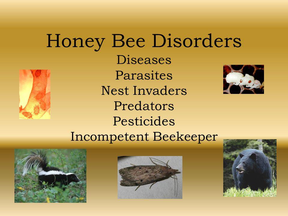 Honey Bee Disorders Diseases Parasites Nest Invaders Predators Pesticides Incompetent Beekeeper