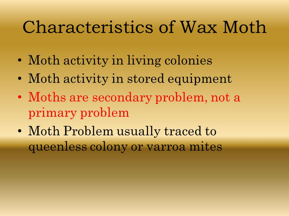 Characteristics of Wax Moth Moth activity in living colonies Moth activity in stored equipment Moths are secondary problem, not a primary problem Moth