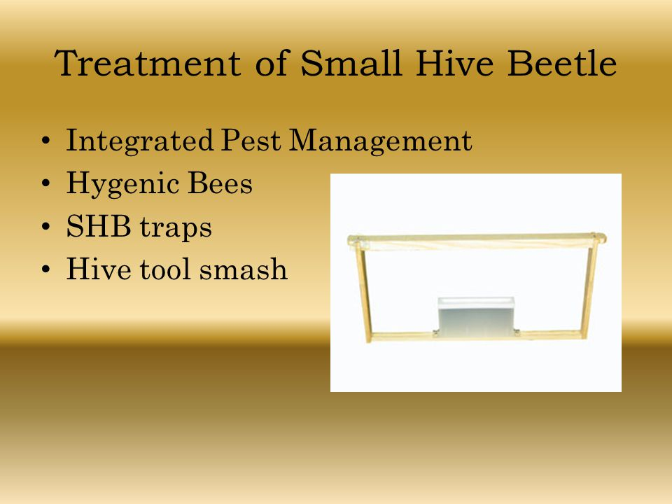 Treatment of Small Hive Beetle Integrated Pest Management Hygenic Bees SHB traps Hive tool smash