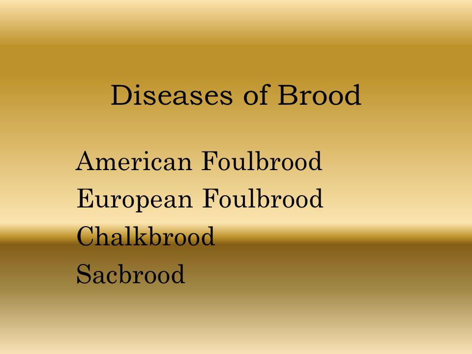 Diseases of Brood American Foulbrood European Foulbrood Chalkbrood Sacbrood