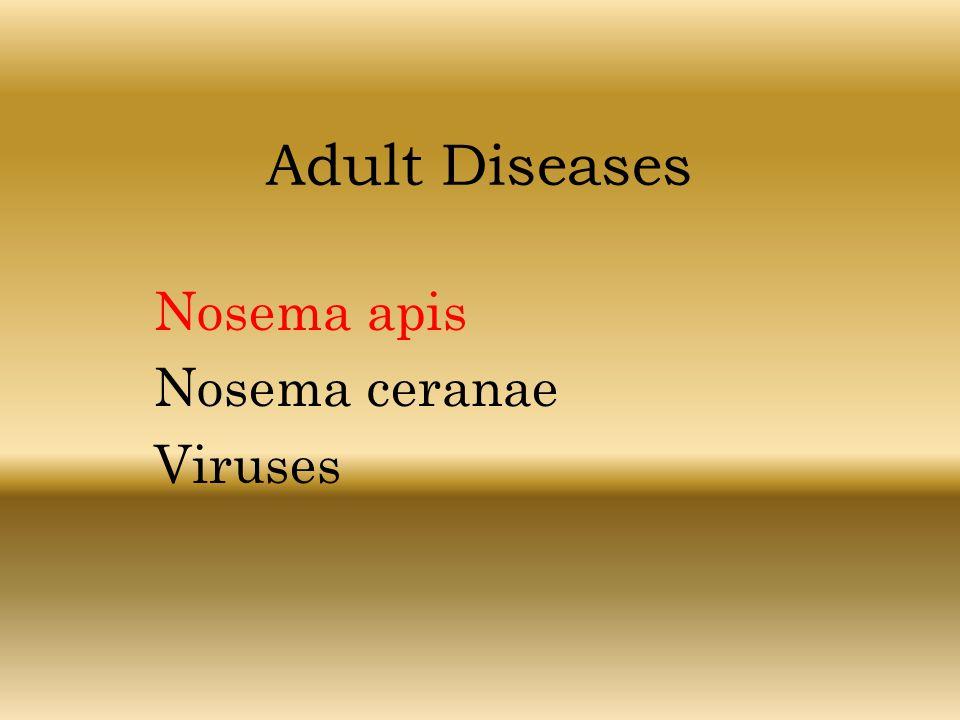 Adult Diseases Nosema apis Nosema ceranae Viruses