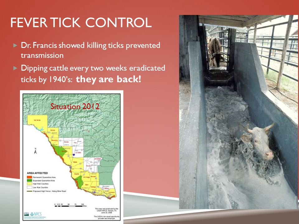 FEVER TICK CONTROL  Dr. Francis showed killing ticks prevented transmission  Dipping cattle every two weeks eradicated ticks by 1940's: they are bac