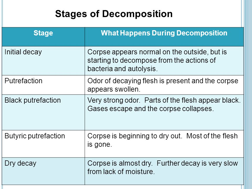 StageWhat Happens During Decomposition Initial decayCorpse appears normal on the outside, but is starting to decompose from the actions of bacteria an