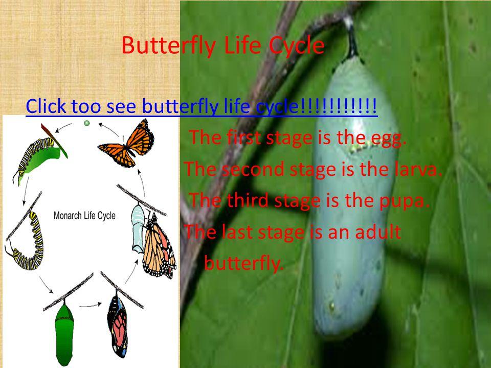ButterfliesButterflies