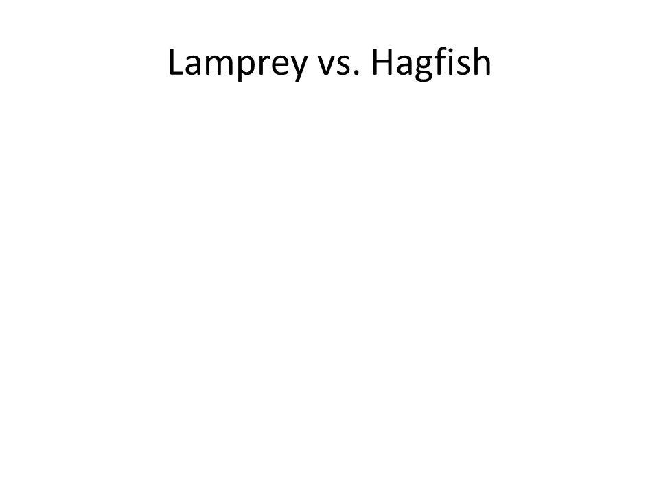 Lamprey vs. Hagfish