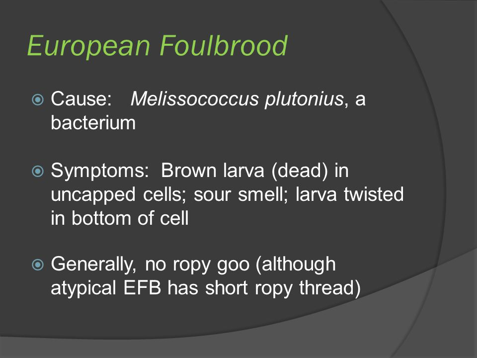 European Foulbrood  Cause: Melissococcus plutonius, a bacterium  Symptoms: Brown larva (dead) in uncapped cells; sour smell; larva twisted in bottom