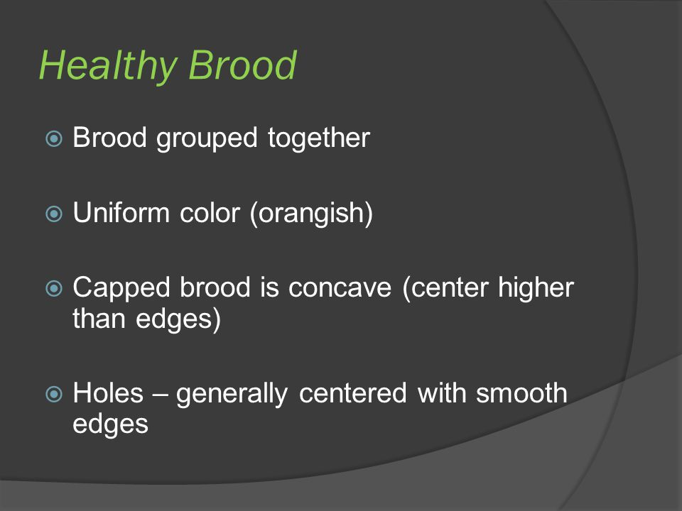 Healthy Brood  Brood grouped together  Uniform color (orangish)  Capped brood is concave (center higher than edges)  Holes – generally centered wi