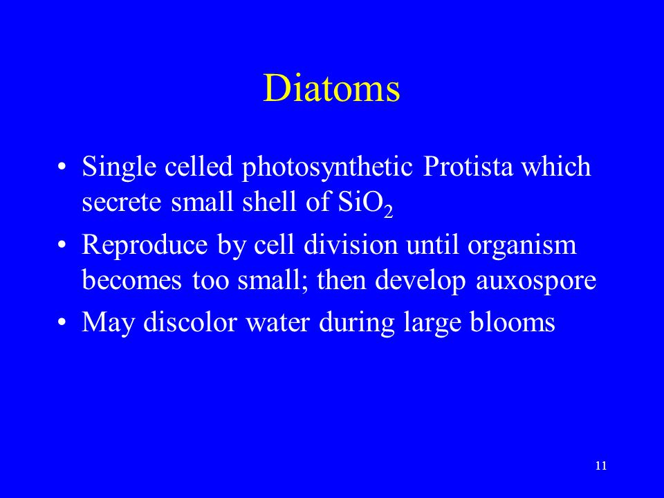Diatoms Single celled photosynthetic Protista which secrete small shell of SiO 2 Reproduce by cell division until organism becomes too small; then dev