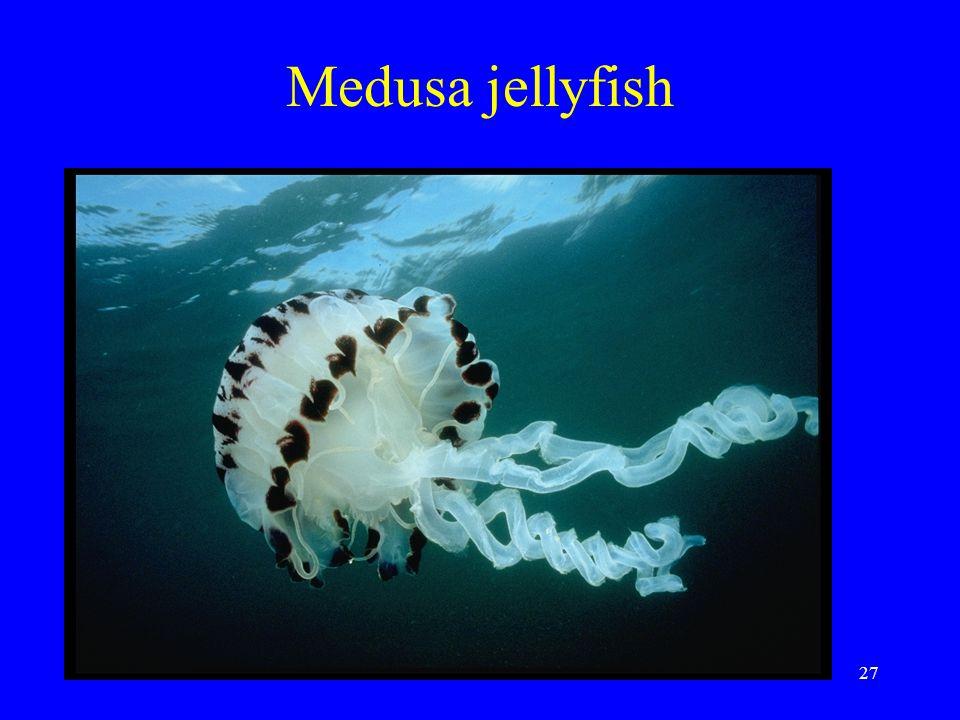 Medusa jellyfish 27