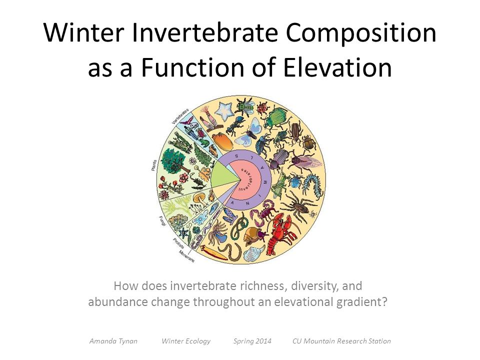 Winter Invertebrate Composition as a Function of Elevation How does invertebrate richness, diversity, and abundance change throughout an elevational gradient.