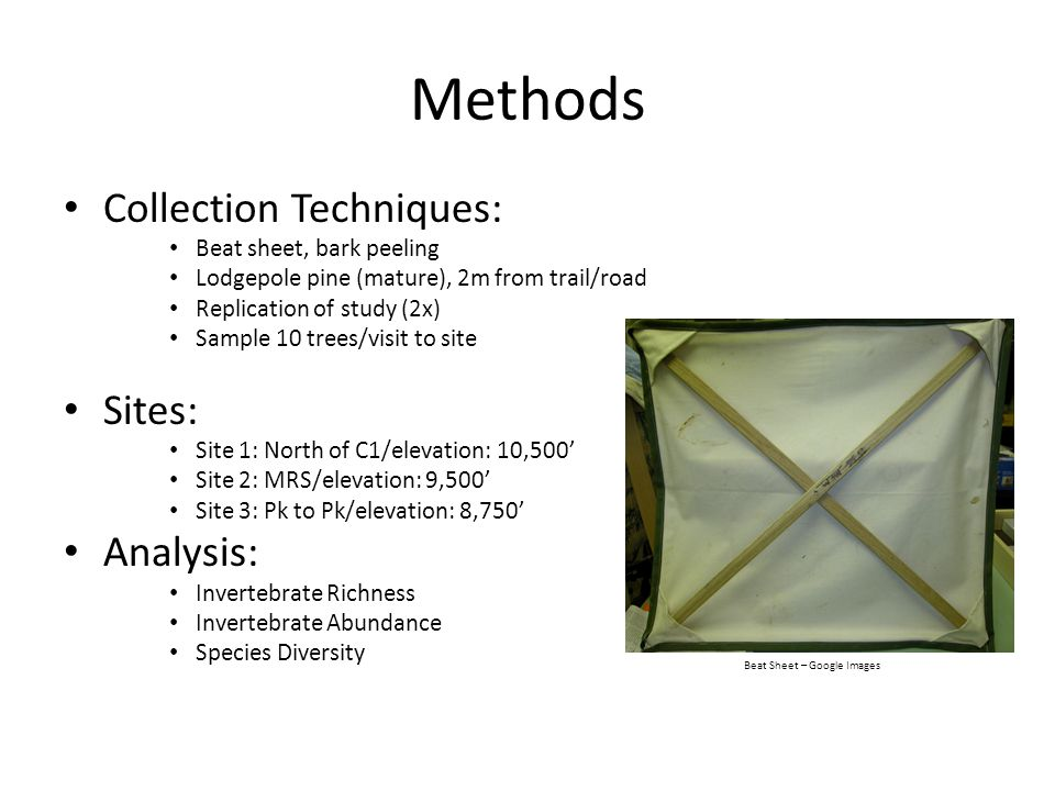 Methods Collection Techniques: Beat sheet, bark peeling Lodgepole pine (mature), 2m from trail/road Replication of study (2x) Sample 10 trees/visit to site Sites: Site 1: North of C1/elevation: 10,500' Site 2: MRS/elevation: 9,500' Site 3: Pk to Pk/elevation: 8,750' Analysis: Invertebrate Richness Invertebrate Abundance Species Diversity Beat Sheet – Google Images