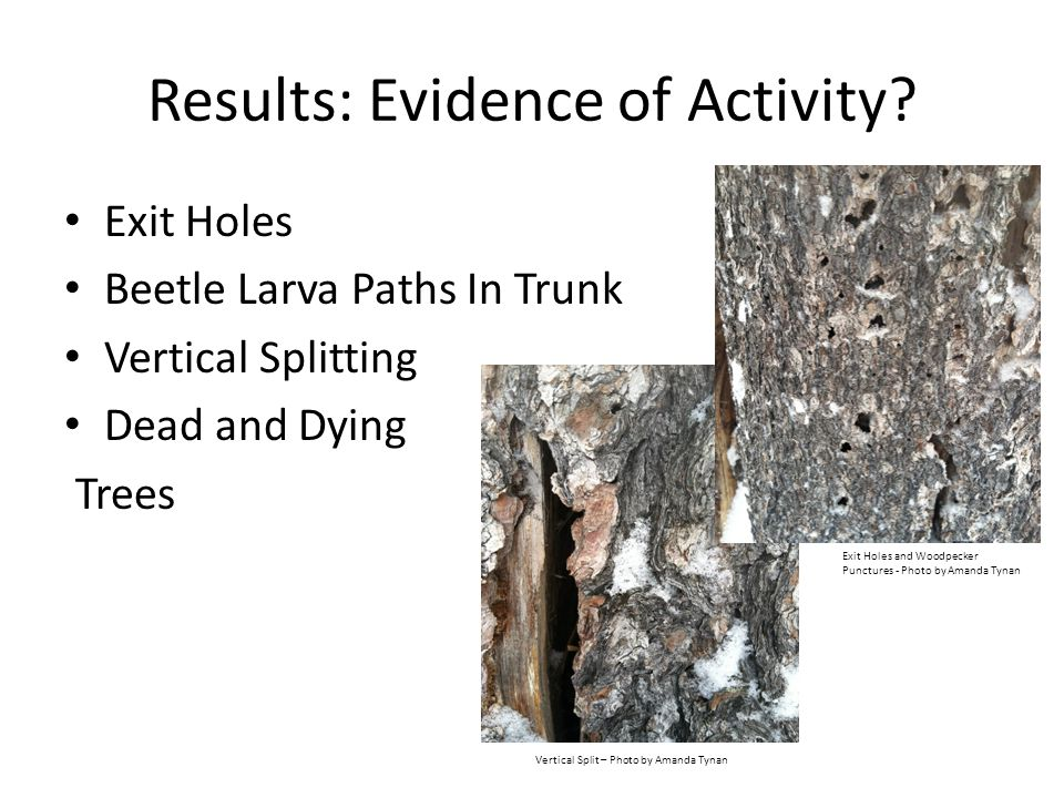 Results: Evidence of Activity.