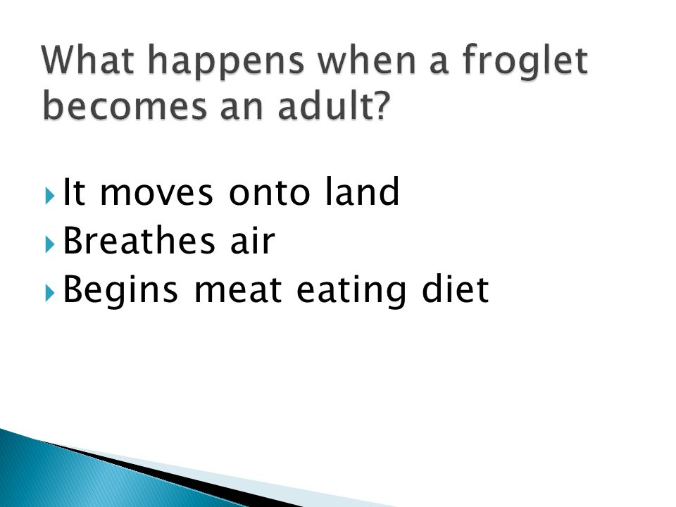  It moves onto land  Breathes air  Begins meat eating diet