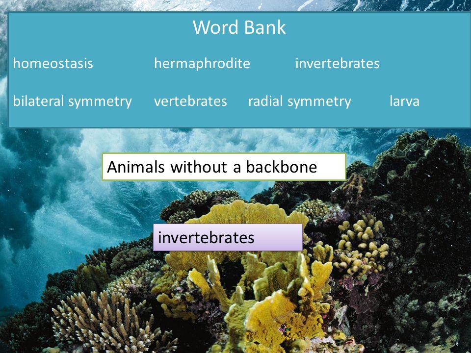 Word Bank homeostasishermaphroditeinvertebrates bilateral symmetryvertebratesradial symmetrylarva Animals without a backbone invertebrates