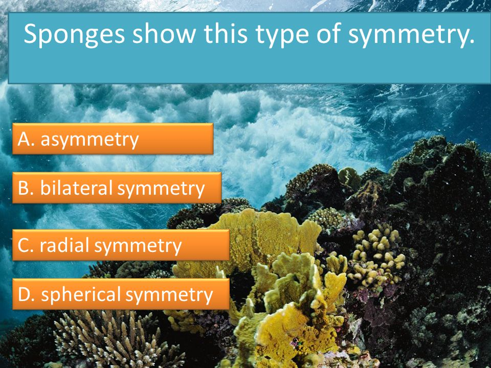 Sponges show this type of symmetry.A. asymmetry B.