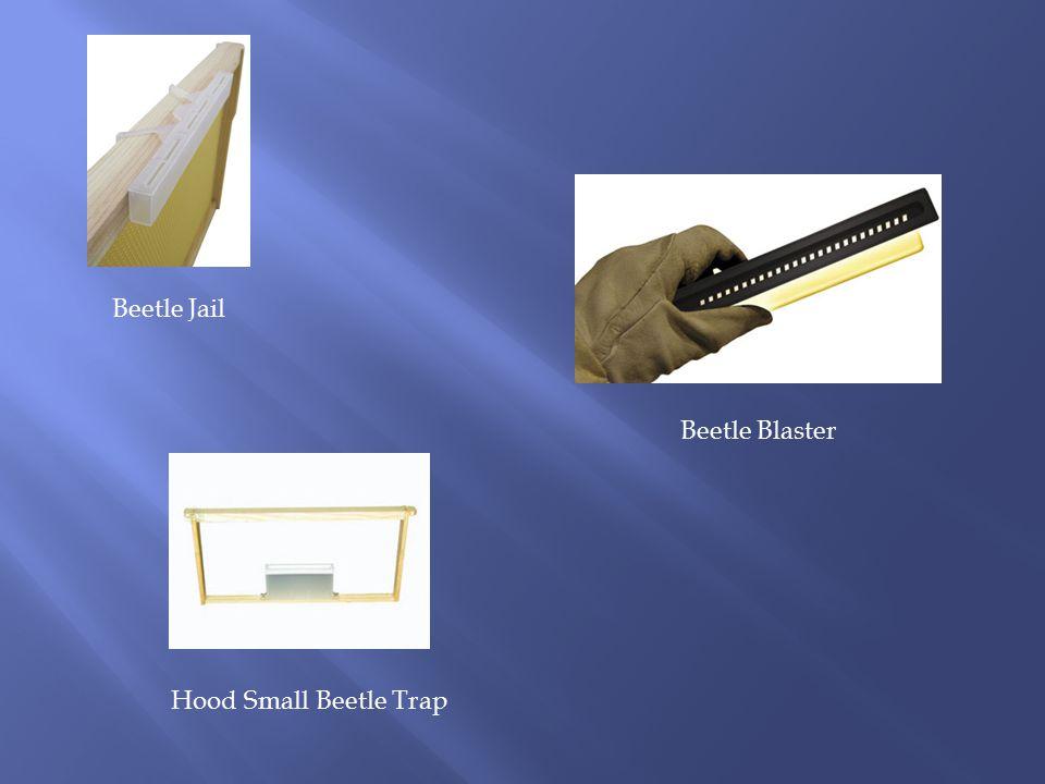 Beetle Jail Beetle Blaster Hood Small Beetle Trap