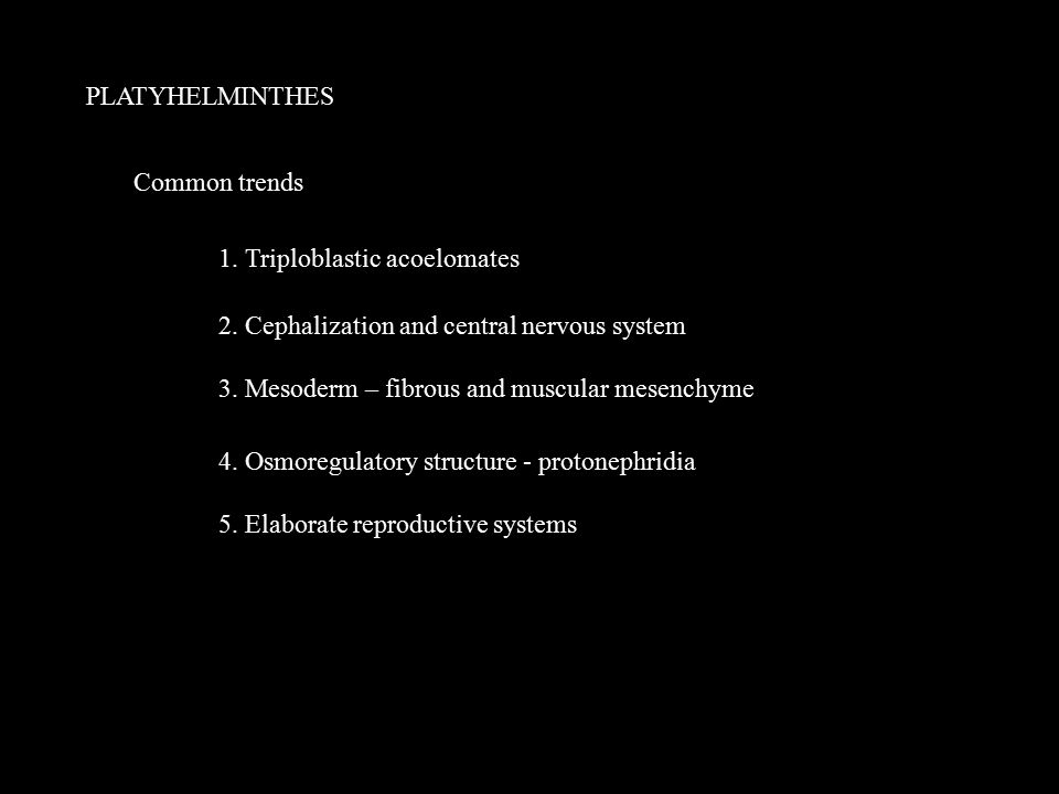 PLATYHELMINTHES Common trends 1. Triploblastic acoelomates 2. Cephalization and central nervous system 3. Mesoderm – fibrous and muscular mesenchyme 4