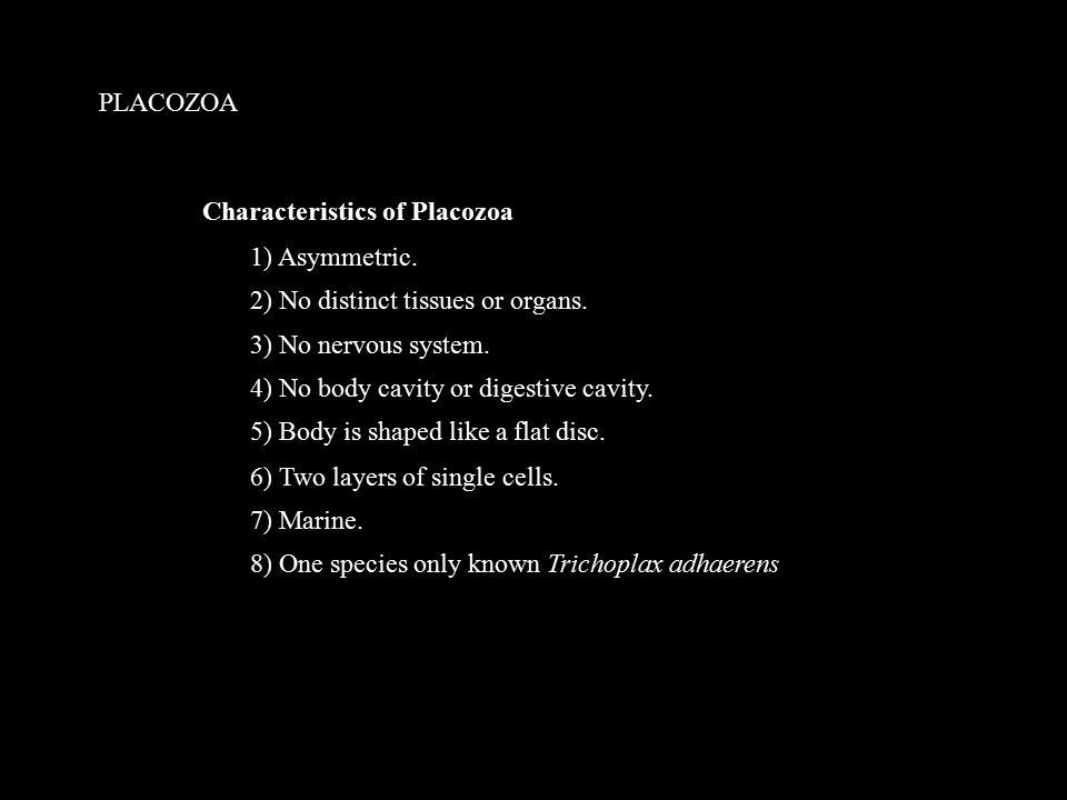 PLACOZOA 1) Asymmetric. 2) No distinct tissues or organs.