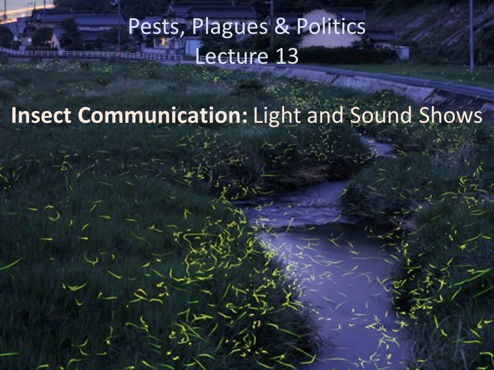 Key Points: Insect Communication: Light and Sound Shows Bioluminescence – Which orders use it.