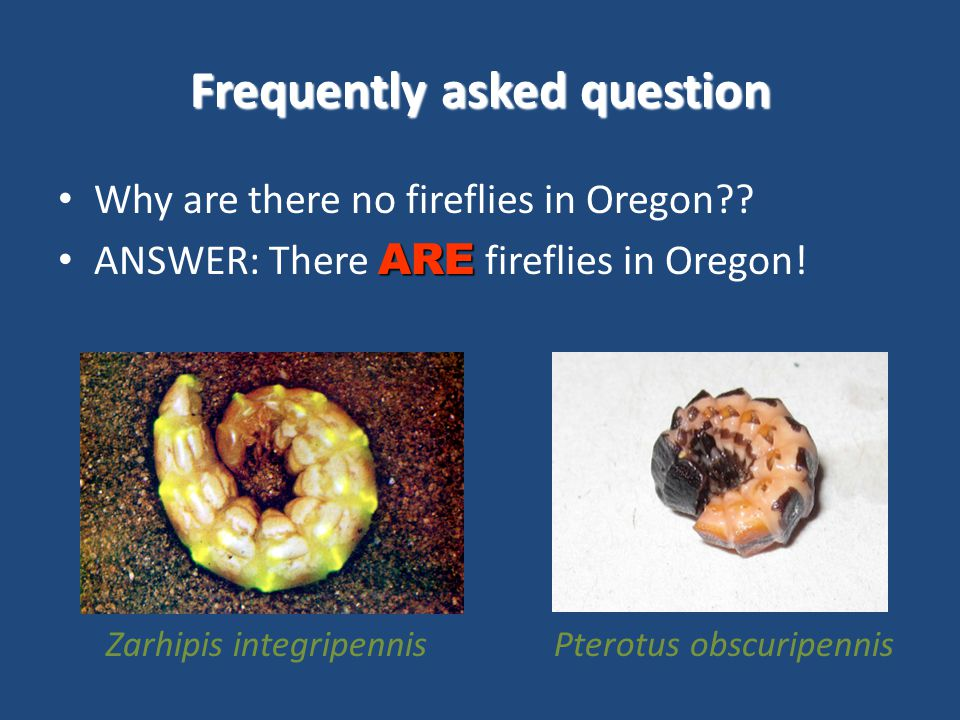 Frequently asked question Why are there no fireflies in Oregon .