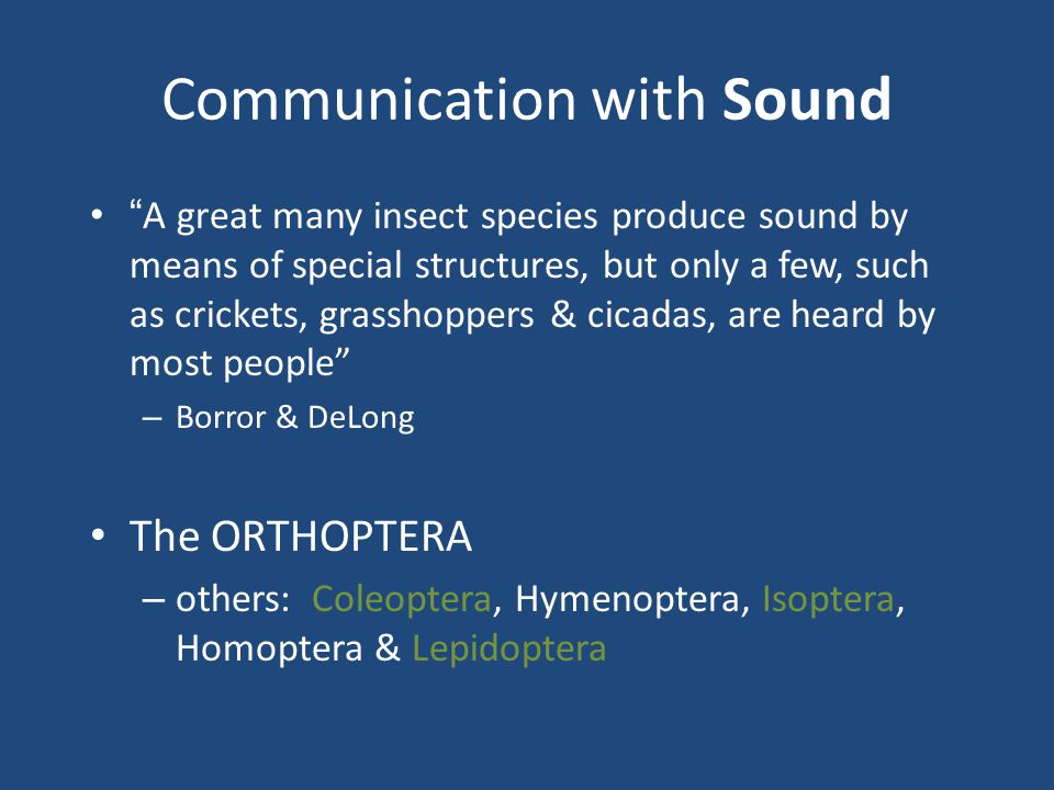 Communication with Sound A great many insect species produce sound by means of special structures, but only a few, such as crickets, grasshoppers & cicadas, are heard by most people – Borror & DeLong The ORTHOPTERA – others: Coleoptera, Hymenoptera, Isoptera, Homoptera & Lepidoptera