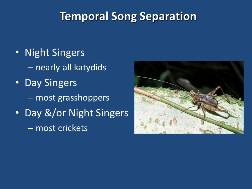 Temporal Song Separation Night Singers – nearly all katydids Day Singers – most grasshoppers Day &/or Night Singers – most crickets