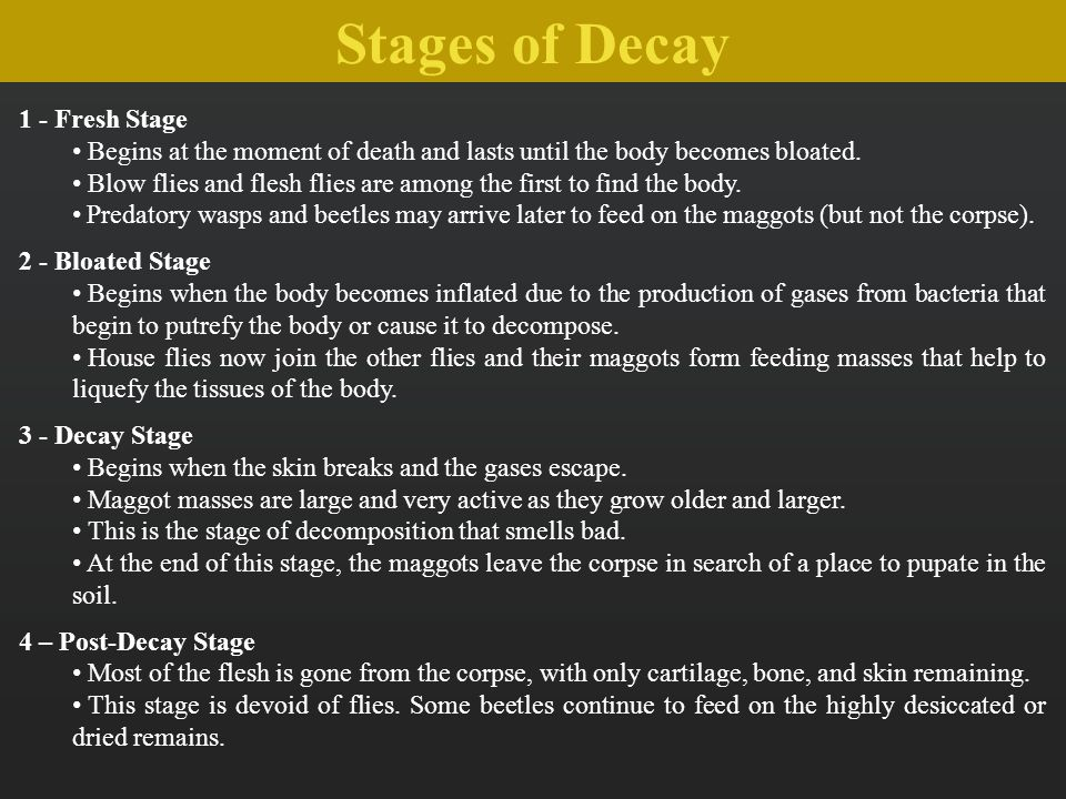 Stages of Decay 1 - Fresh Stage Begins at the moment of death and lasts until the body becomes bloated. Blow flies and flesh flies are among the first
