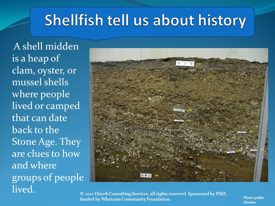 A shell midden is a heap of clam, oyster, or mussel shells where people lived or camped that can date back to the Stone Age. They are clues to how and