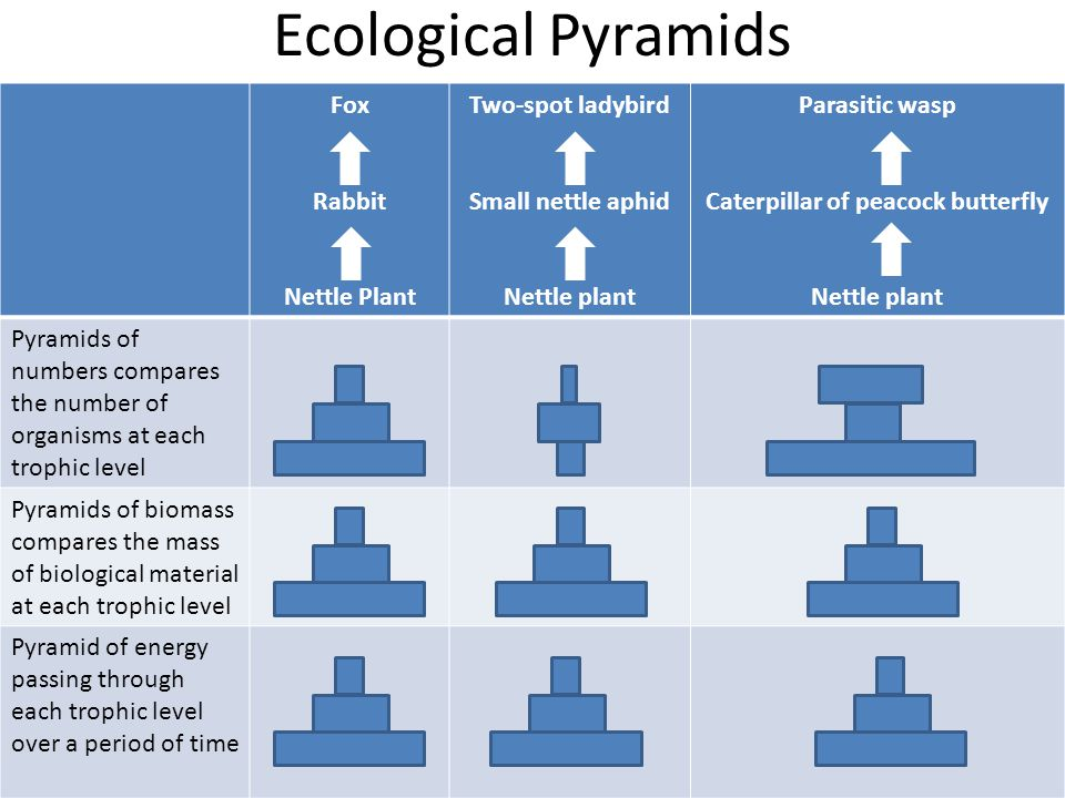 Plenary: Summary questions 1.State 2 advantages of using a pyramid of biomass rather than a pyramid of numbers when representing quantitative information on a food chain (2 marks).
