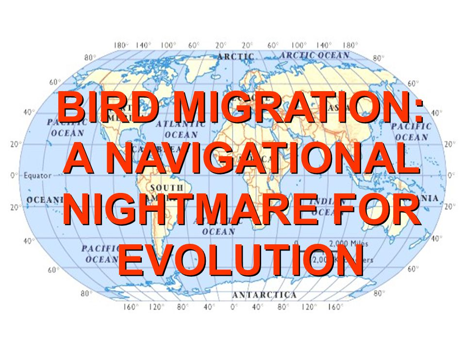 BIRD MIGRATION: A NAVIGATIONAL NIGHTMARE FOR EVOLUTION BIRD MIGRATION: A NAVIGATIONAL NIGHTMARE FOR EVOLUTION