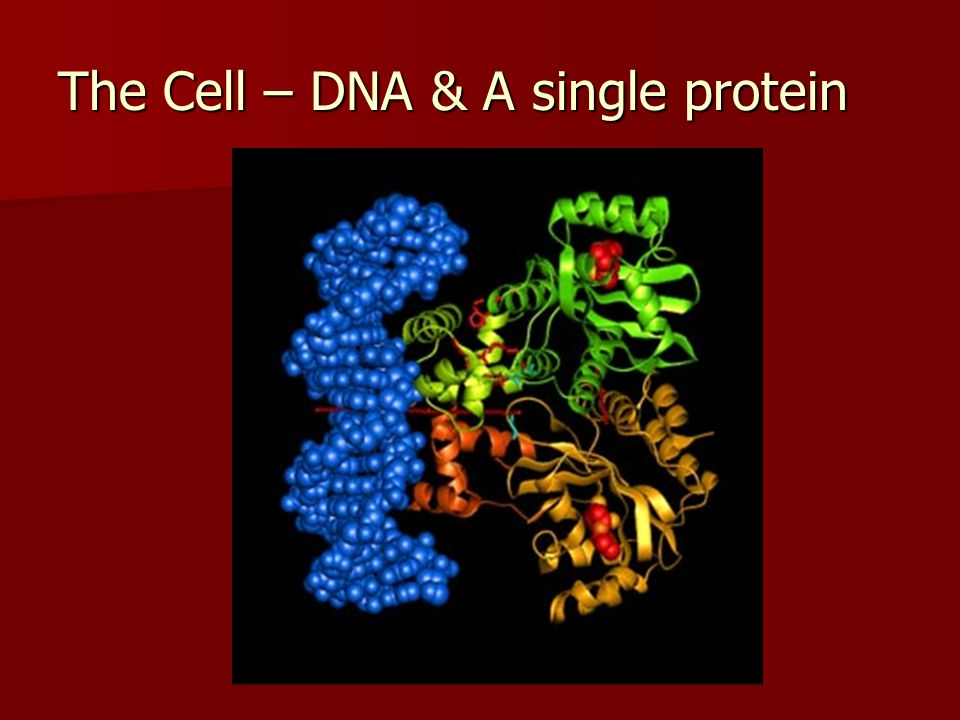 The Cell – DNA & A single protein