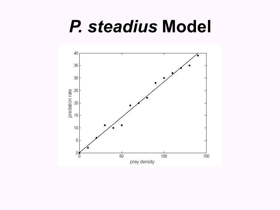 P. steadius Model