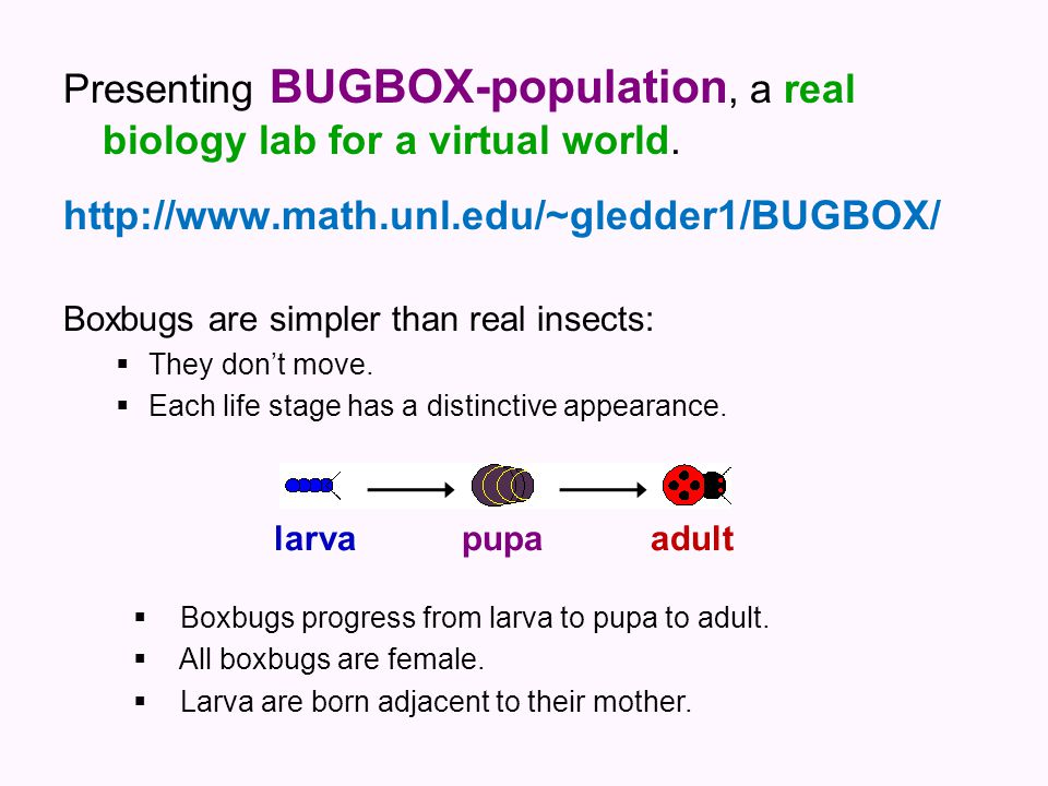 Presenting BUGBOX-population, a real biology lab for a virtual world. http://www.math.unl.edu/~gledder1/BUGBOX/ Boxbugs are simpler than real insects: