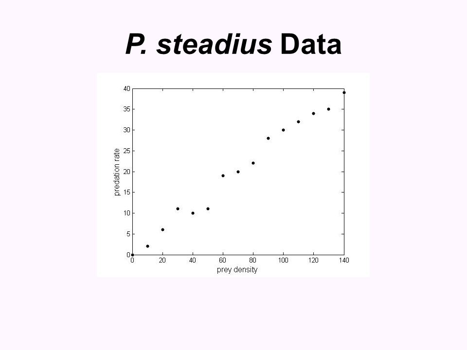 P. steadius Data