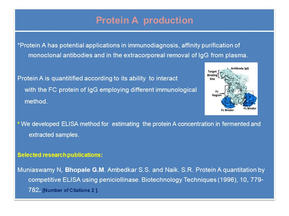 Protein A production *Protein A has potential applications in immunodiagnosis, affinity purification of monoclonal antibodies and in the extracorporeal removal of IgG from plasma.